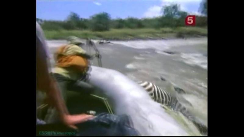 «Борьба за выживание – Сафари на воздушном шаре» (Документальный, животные, 1989)