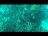 Подводный мир.Красное море..