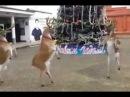 смешной танец на елке прикол
