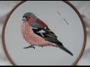 2. Hand Embroidery. Chaffinch. Stitching a Bird Online Class
