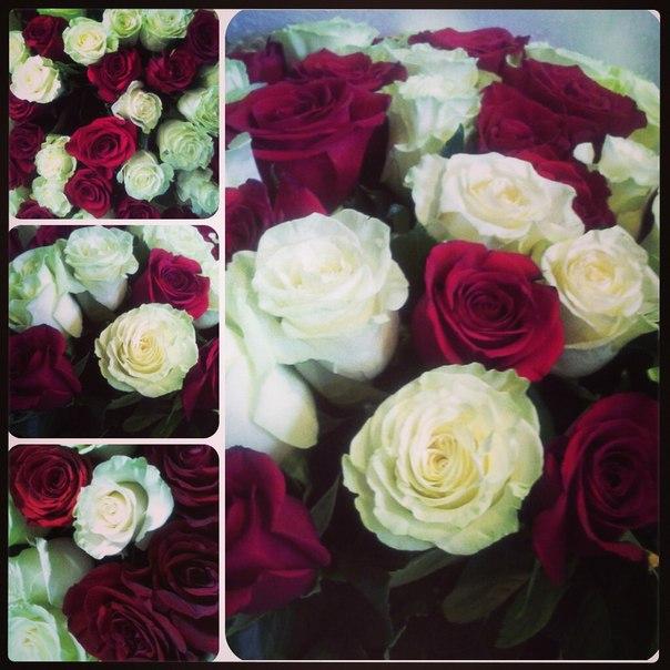Реальные цветы фото