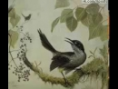 Брачное пение вымершей гавайской птицы Чешуегорлый мохо / Kauai 'O'o