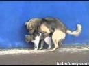 Cainele care fute pisici
