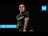 Joe Rogan Strength Training & Pad Work | Muscle Madness joe rogan strength training & pad work | muscle madness
