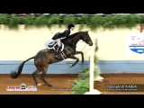 A Judges Perspective 2015 World Show Amateur Working Hunter World Champion