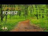 4K Spring Forest - Blackbird Song - Bird Singing Chirping - Ultra HD Relaxing Nature Video &amp Sounds