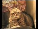 """Видео ДЕНЬ ЗВЕЗДЫ - видео с юмором о реально поющей кошке, настоящий и редкий талант, прикольная кошка! """"Звёздочки""""  из """" ю туба"""