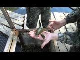 Розведення та реалізація  Раків на риболовному господарстві