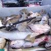 Морская рыбалка у маяка