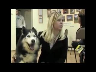 Озвучка животных