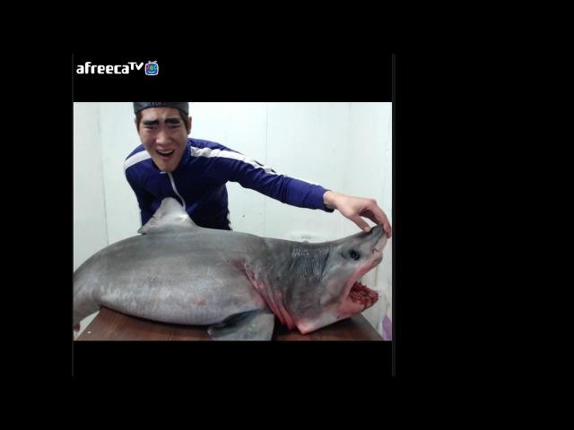 바다의 왕 상어 (청상아리) 1편 무게50kg..길이2m..! [턱형]