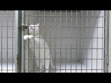 Кот, король побега