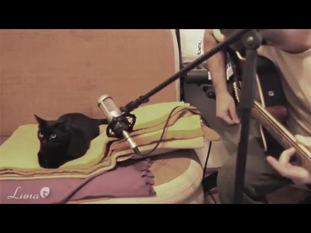 кошка по имени Луна поет вместе с хозяином