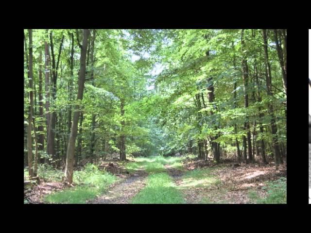 Sokolov - Haydn: Sonata Hob.XVI:34 in E minor (Bisdorf, 12th May 2002)