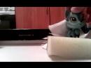 Лителес петшоп обзор офиса с Джели от Настявк200