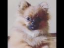 Пэгги - очень злая собака