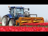 The Story of the Tulips Planting to Harvest One year at Maliepaard Bloembollen