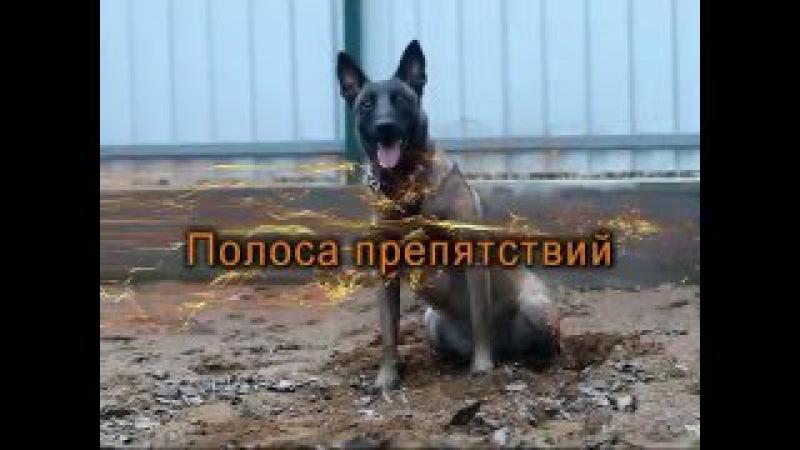 Образцовая полоса препятствий для собак