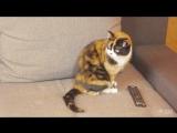 7 ЛАЙФХАКОВ КОТОРЫЕ УПРОСТЯТ ЖИЗНЬ КОТА! - СливкиШоу - make a better life for the cat