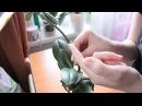 Корни орхидеи и мокнущие пятна Важное наблюдение