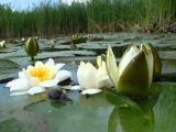 Цветочный рай( Лилии ) ....Евгений Дога