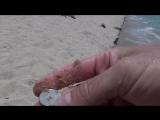 Поиск золота с металлоискателем на пляже. Metal Detecting. Treasure Hunters  Кладоискатели