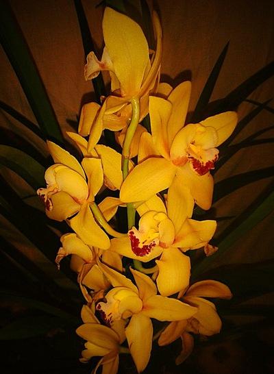Орхидея Винница