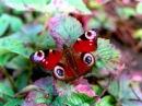 Бабочки Музыка Моцарта