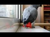 Попугай прикольно поет песню Ани Лорак Расскажи)))) - Видео Dailymotion