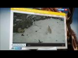 За жизнью животных в Московском зоопарке можно будет наблюдать в режиме онлайн