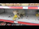 В супермаркете Дикси