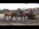 HARM Mareike GER CAI3* Valkenswaard DVI Marathon Horses Four In Hand 30 08 2016 O 7