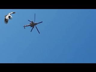 Ирак.28-02-2016.МИ-28Н работает по даиш в провинции Анбар