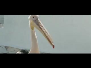 Пеликан (2011 Фильм Русский)