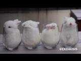 Кролики в чашках