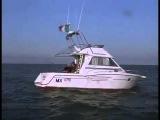 Shark Attack 3 Megalodon 2002
