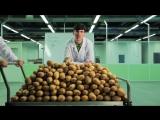 Экспериментатор. Электричество из картошки