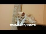 Barbara Livindor продается все вопросы 89133067682 (вибер,вацап)