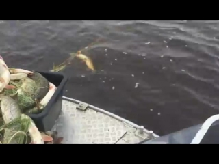 Рыбалка на Оби 2015, Хлеще анекдота  сами в шоке!