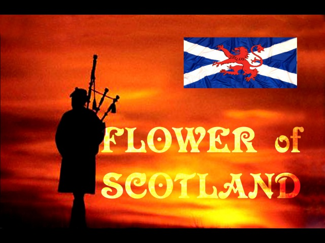 FLOWER OF SCOTLAND - ROYAL SCOTS DRAGOON GUARDS.