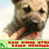 """Приют  (негосударственный) для  собак  """"Верность"""