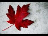 Гражданство в Канаде, церемония вручения гражданства и Канадский паспорт