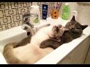 КОТЫ ПРИКОЛЫ 2016 - СМЕШНЫЕ КОТЫ 2016 - Funny Cats 2016