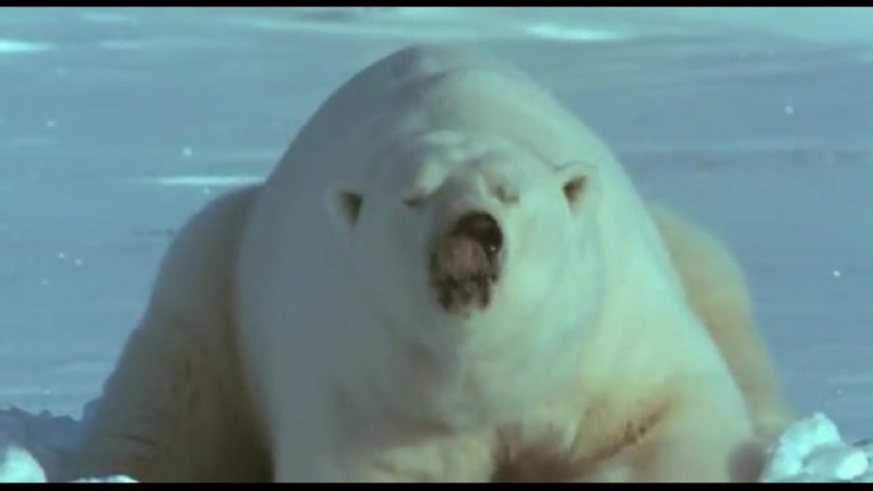 BBC Ребятам о зверятах (все серии) - Белый медведь