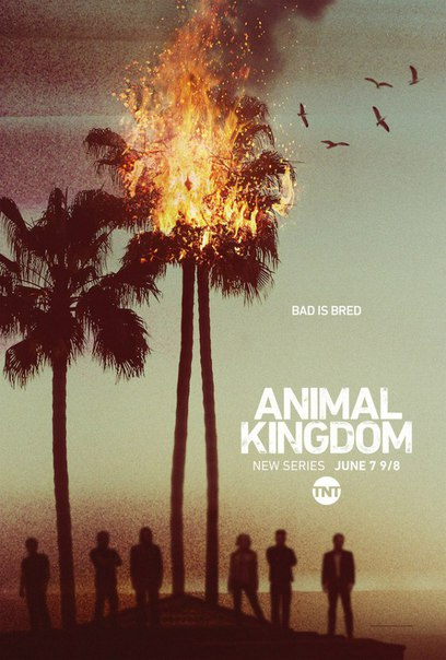 По волчьим законам (Animal Kingdom)