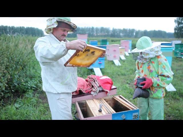 Пчеловодство. Сергей Толстов советы для начинающих пчеловодов. Меченая плодная ...