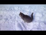 Смешная Реакция Кота На Первый Снег!