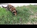 Мышка играет с кошкой