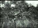Венгерская армия на Восточном фронте (Июнь 1941 - Август 1943)