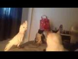 Перевод с кошачьего )) попугай разговаривает с кошками